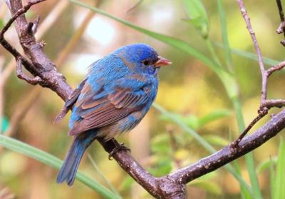 Tips for birdwatchers: Bring migrating birds to your yard _lowres (copy)
