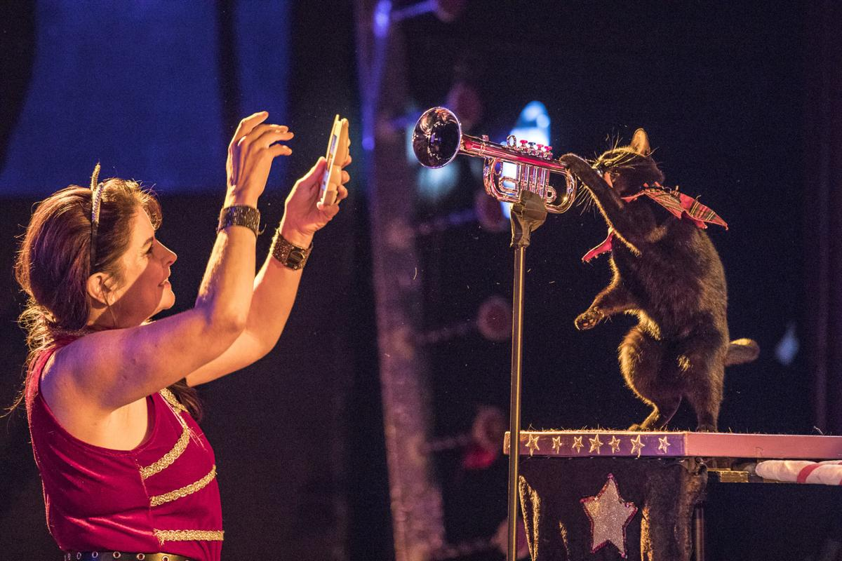 Amazing Acro-cats return to New Orleans with a purr-fect holiday show | Crescent City community news | nola.com