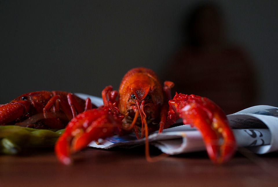 An 11 pound crawfish? Your crawfish questions answered  | News