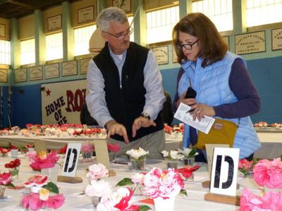 Camellias bloom, compete for judges favor in annual Kenner flower show (copy)