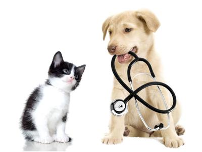 Where to find low-cost pet care in New Orleans_lowres