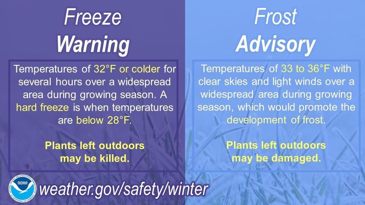 freeze vs frost