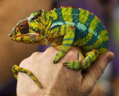 ACA.reptileshow8.adv (copy)