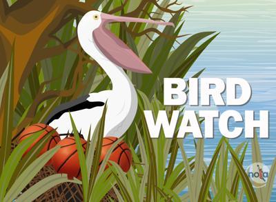 Bird Watch logo