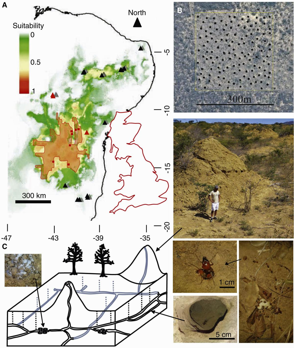 Termite 'nation' as big as Great Britain found in Brazil