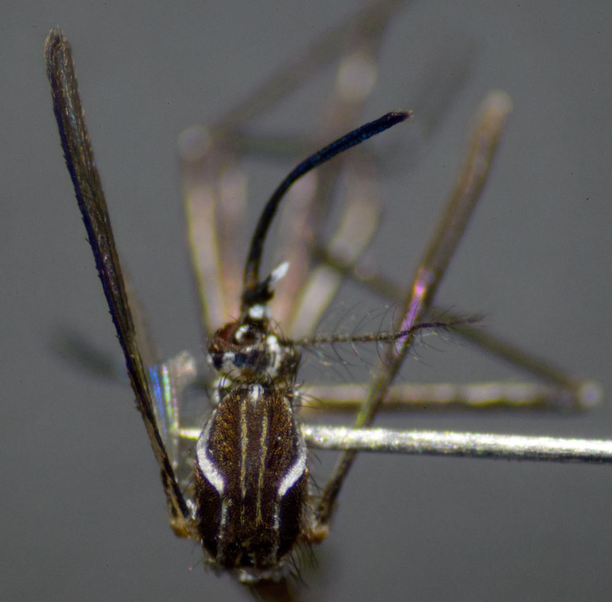 Zika Virus Prevention New Orleans