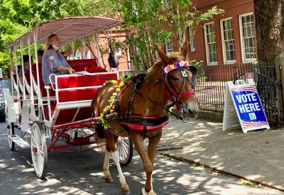 Mule-drawn carriage at French Quarter polling place