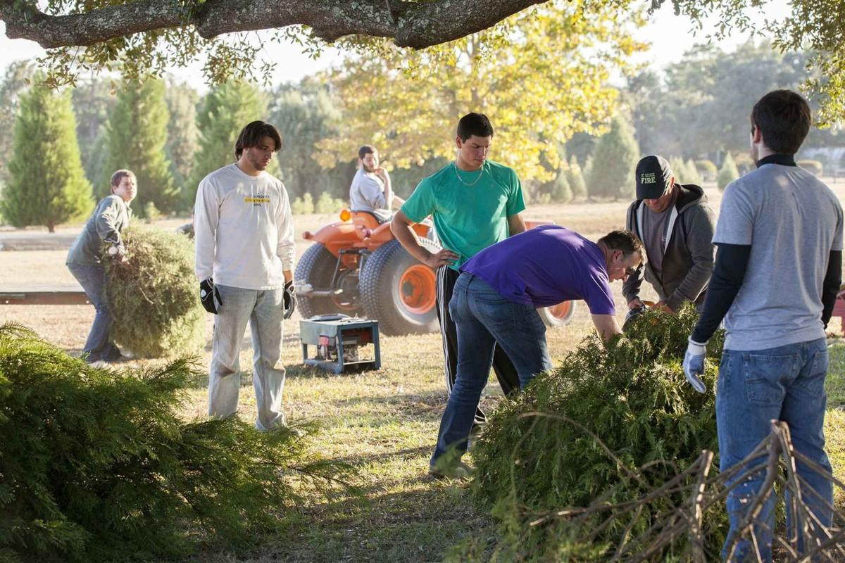 Which Type Of Tree Makes The Perfect Christmas Tree? Local