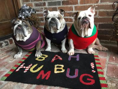 Camp Bow Wow presents the 2017 Gambit Holiday Pet Photo Contest_lowres