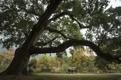 New Orleans voters asked to carve up parks & rec tax pie