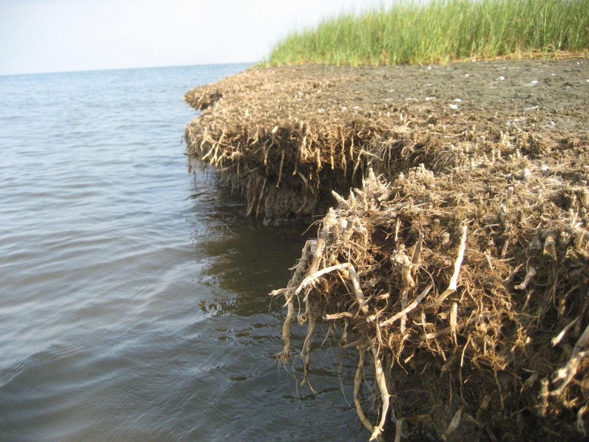 Carbon credits could generate $1.6 billion for Louisiana coastal restoration, study says