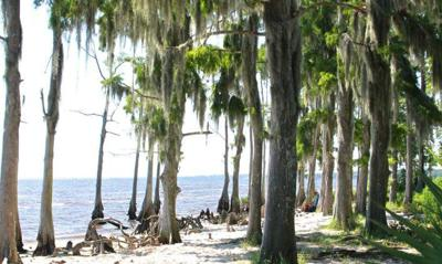 In Profile: Fontainebleau State Park tour with ranger James Dillon _lowres (copy)