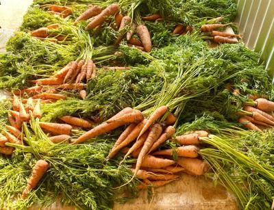carrots.jpg (copy) (copy)