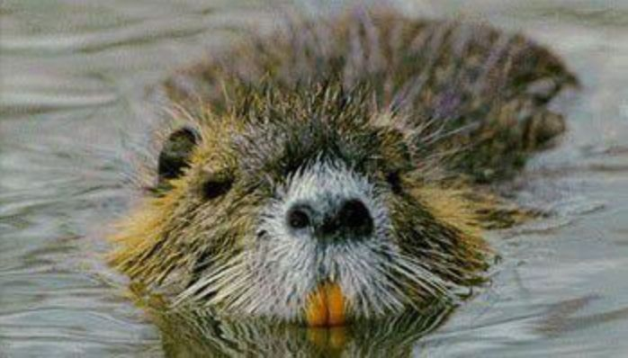 Would you hire a 'nutrition service' called Nutria?_lowres