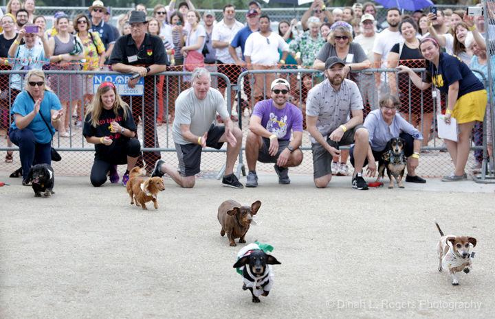 Oktoberfest 2018 Dachshund Races