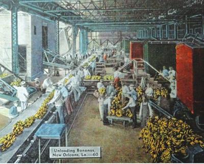 300 Banana trade