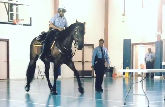 Ace the NOPD mounted unit horse