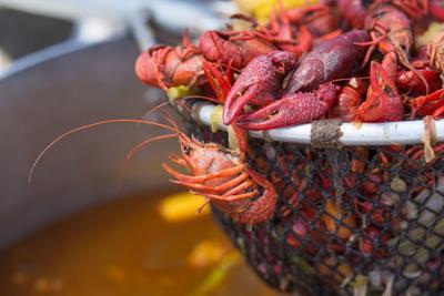 It's crawfish festival season: 10 mudbug fests a-comin'