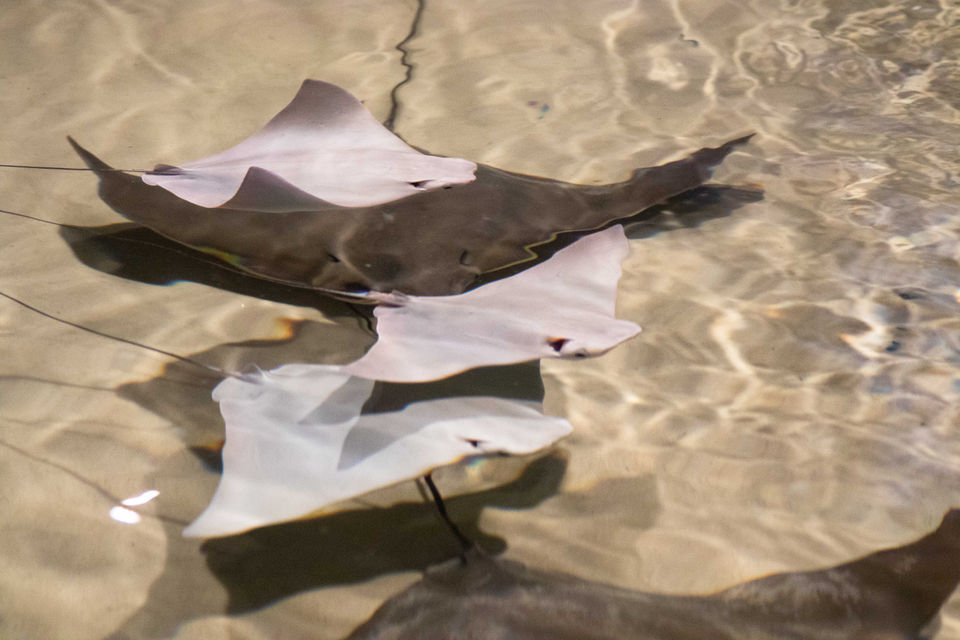 You'll be able to touch (small) sharks and rays at Audubon Aquarium's new touchpool