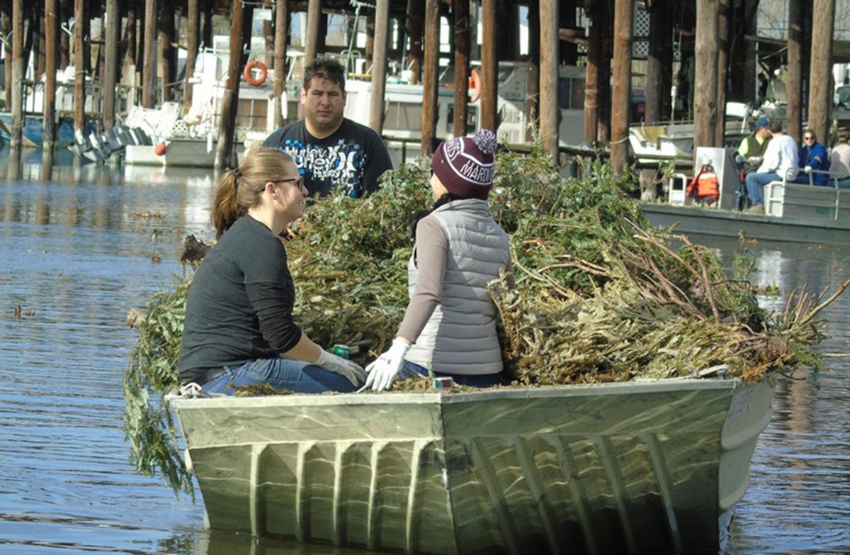 The annual Christmas Tree Marsh Shoreline Recycling Project helps restore coastline