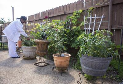 The proper time to plant, prune and fertilize South Louisiana gardens