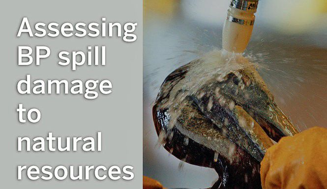 What the BP spill did, and how scientists figured it out