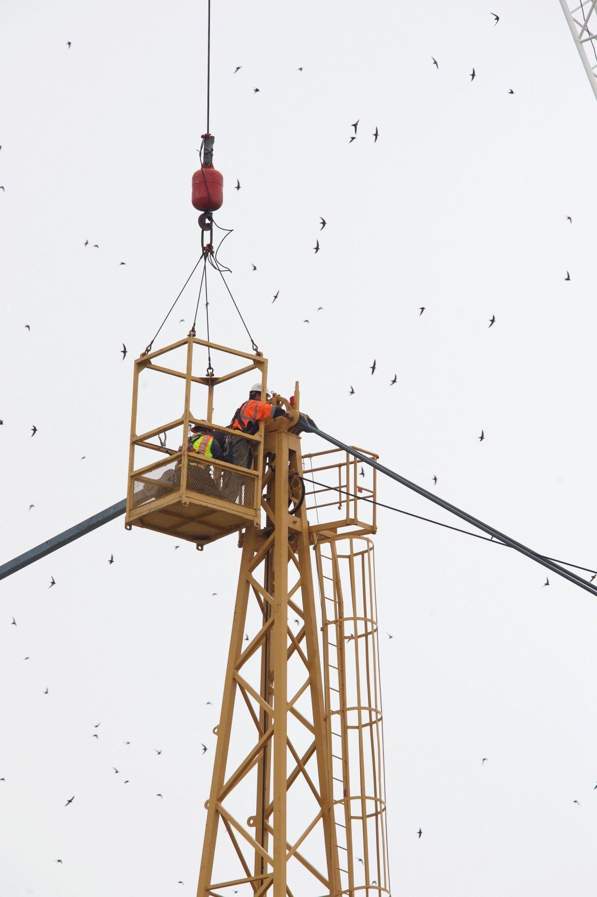 crane latest