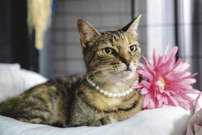 Pet of the week Polly