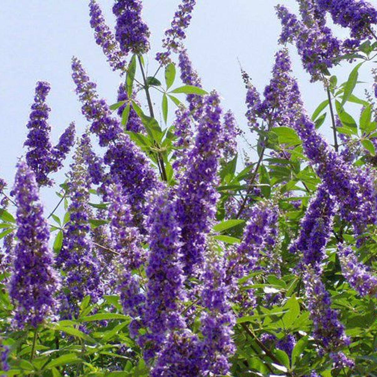 8 Trees And Shrubs That Bloom All Summer Long Even In The Heat
