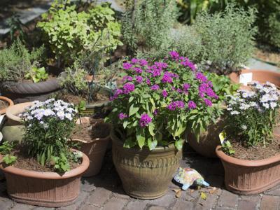 1018hgspace Anne Barnes garden (copy)