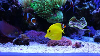 Tips for building a saltwater fish tank_lowres