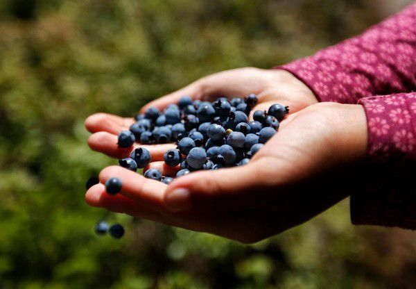 Why you should eat blueberries every day (or at least regularly)