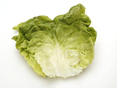 How to grow a salad: 32 lettuce cultivars to plant now