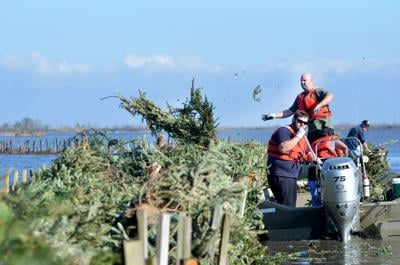 Christmas tree recycling in Goose Bayou
