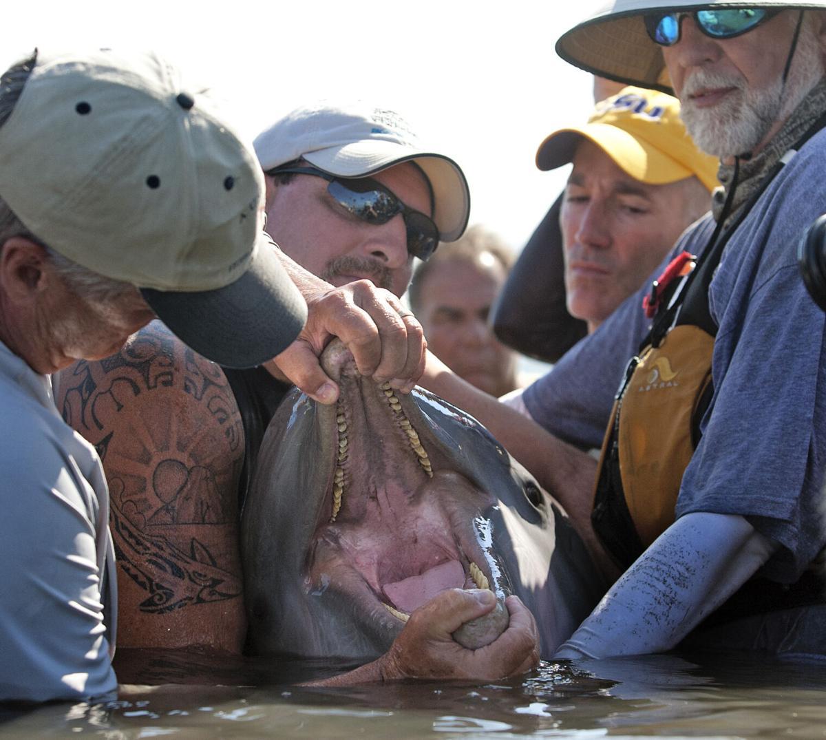 Bottlenose dolphin checkup