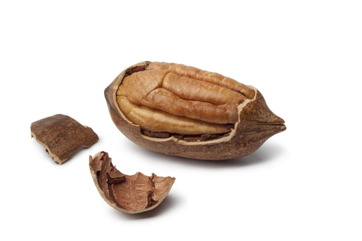 Grow your own pecans: essential planting tips for pecan trees