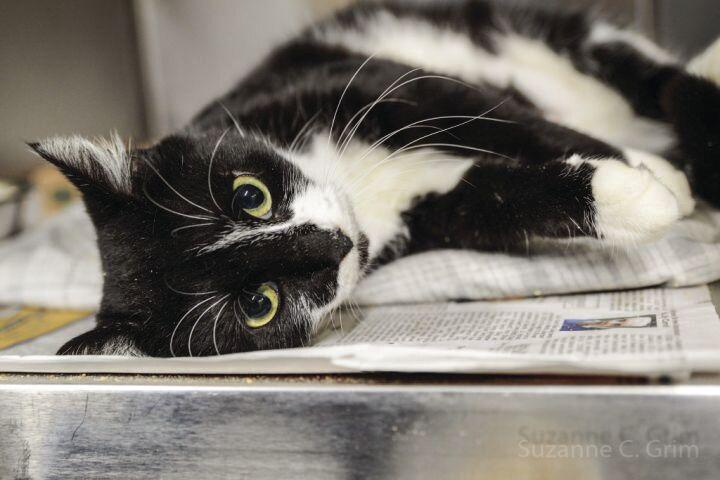 Celebrate National Adopt a Shelter Cat Month