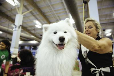 dogshowasc.020.060817.jpg (copy)