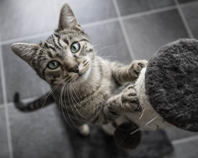 Cat scratch (copy)
