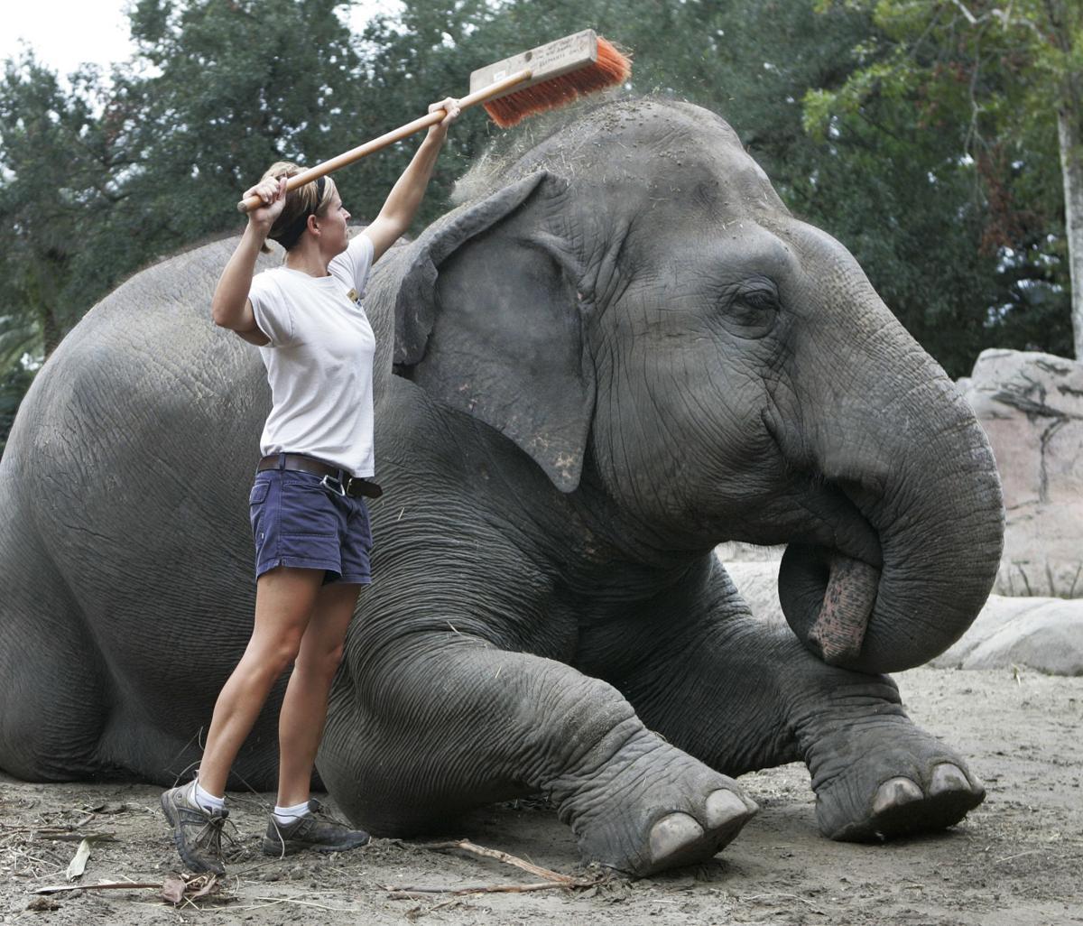 Elephant Heat