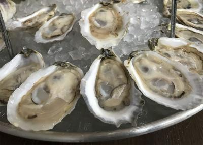Oysters file photo