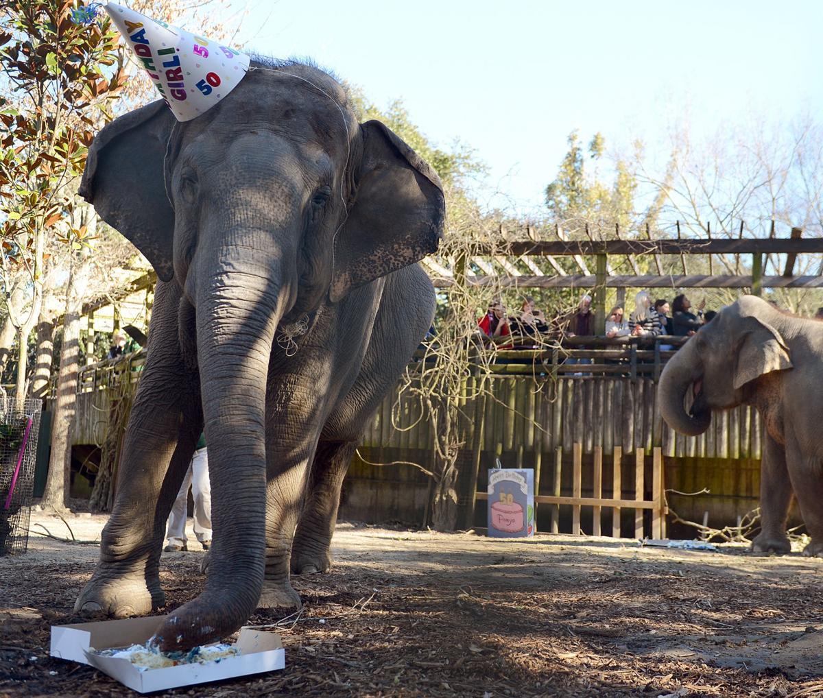 NO.Elephant.011714