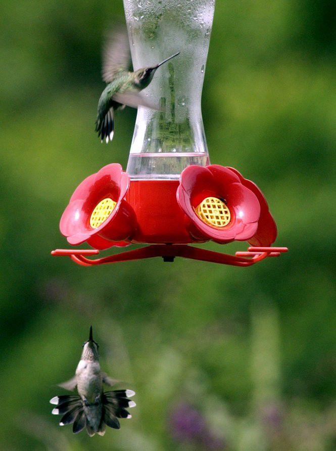 32 Plants To Attract Hummingbirds To Your Yard Home Garden Nola Com