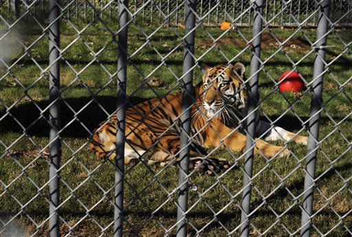 Legislation letting Louisiana truck stop owner keep tiger heads to Bobby Jindal's desk