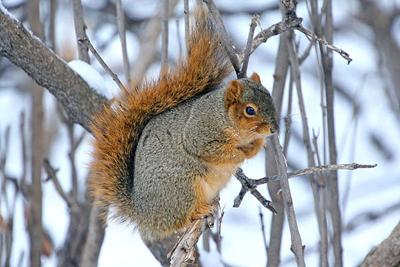 Art Lander's Outdoors: Squirrel hunting for both food and sport has a long history in Kentucky