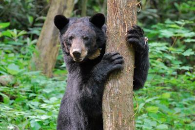 Most problems involving bears are preventable