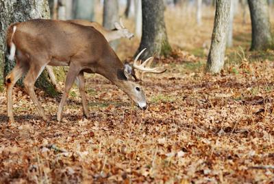 Deer season opens