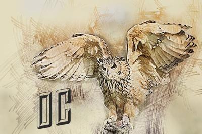 OC Owls Boys and Girls 2021 Basketball Schedule