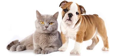 Estill Animal Shelter Pre Registration Info for Spaying & Neutering