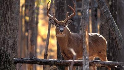 5 Reasons to Hunt Whitetails in Kentucky